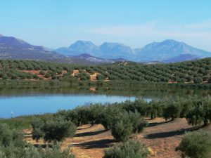Vivir en Jaén