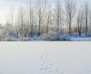 Vivir en Siberia